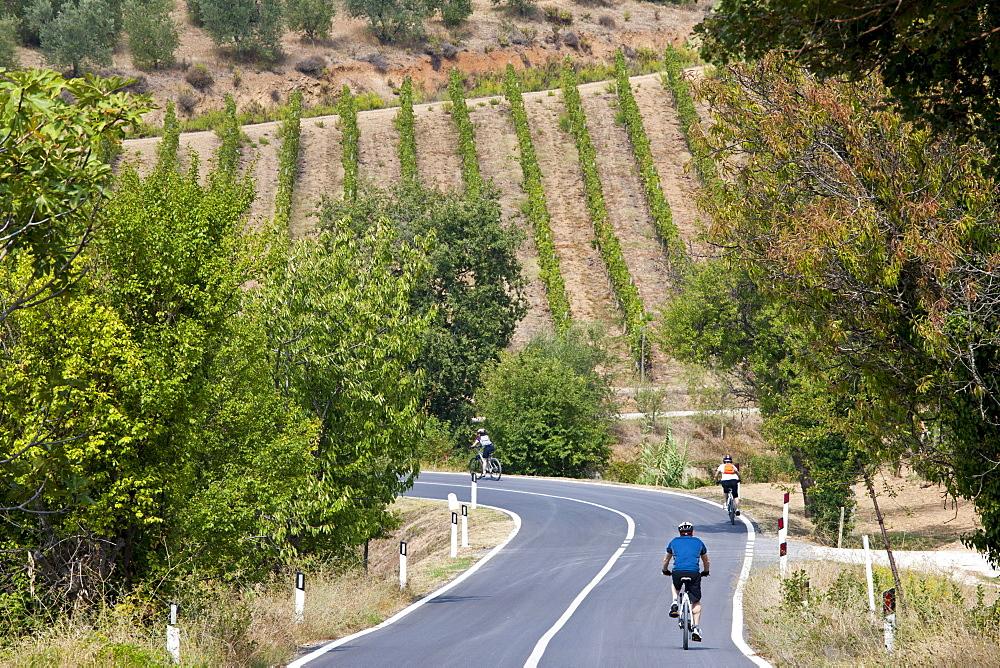 Cyclists on touring holiday near Montalcino, Val D'Orcia, Tuscany, Italy