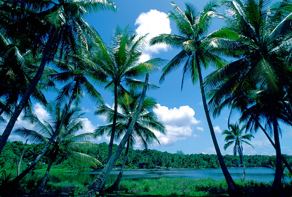 Sun, sea and palm trees at Nauru lagoon, South Pacific