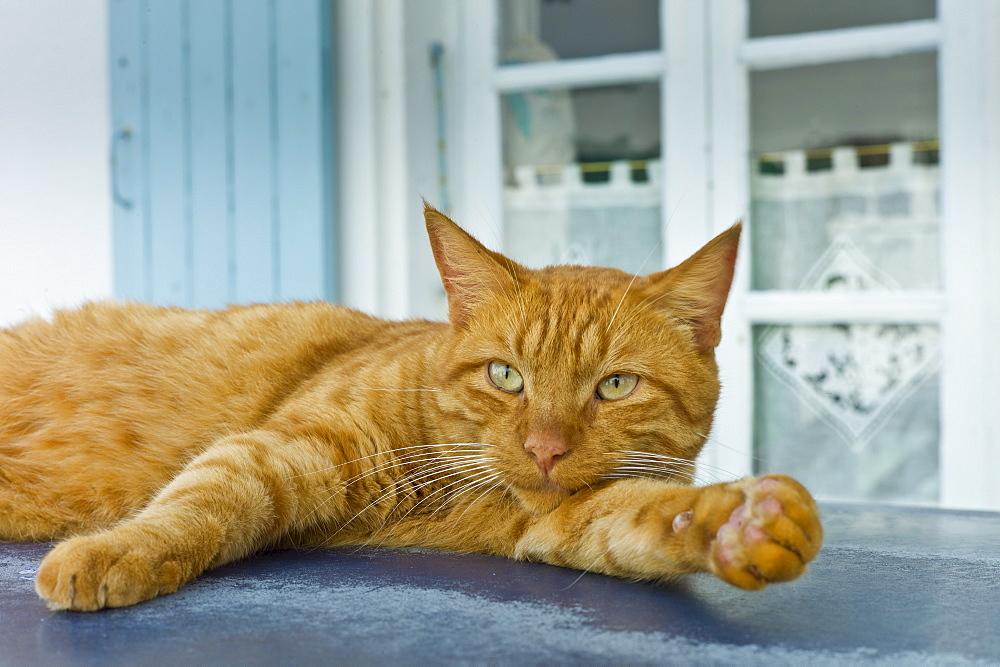 Ginger cat resting on hot tin roof at St Martin de Re, Ile de Re, France - 1161-7192