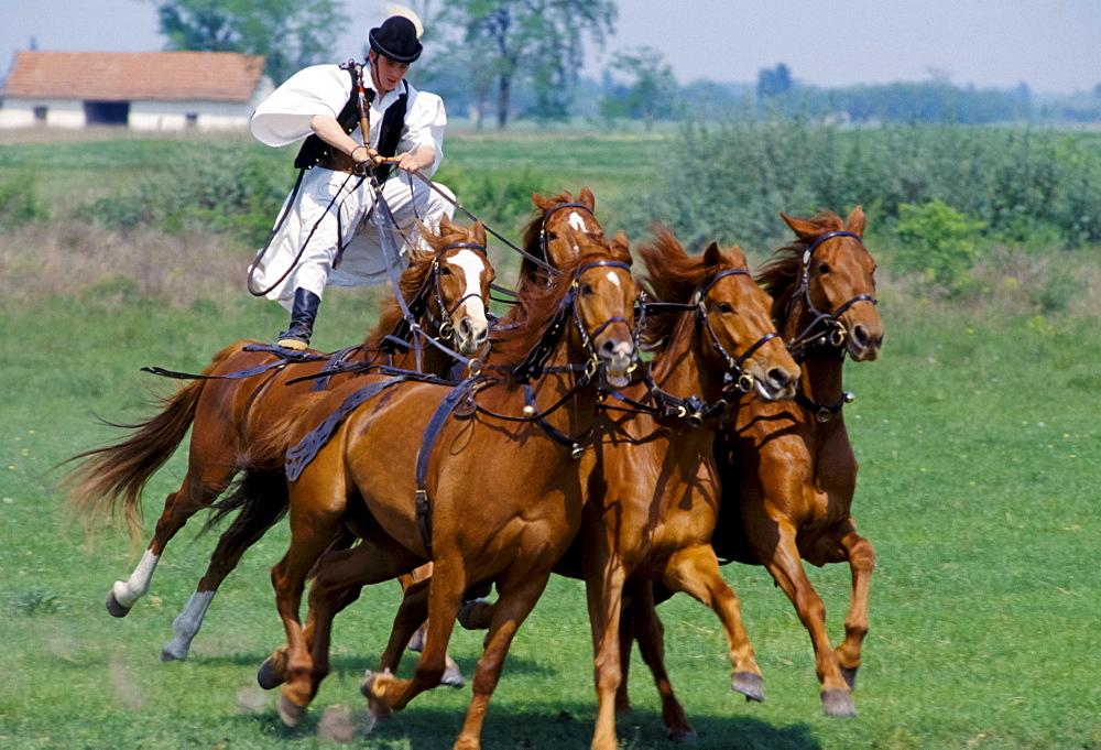 Hungarian Csikos cowboy giving display of horsemanship skills on The Great Plain of Hungary  at Bugac, Hungary