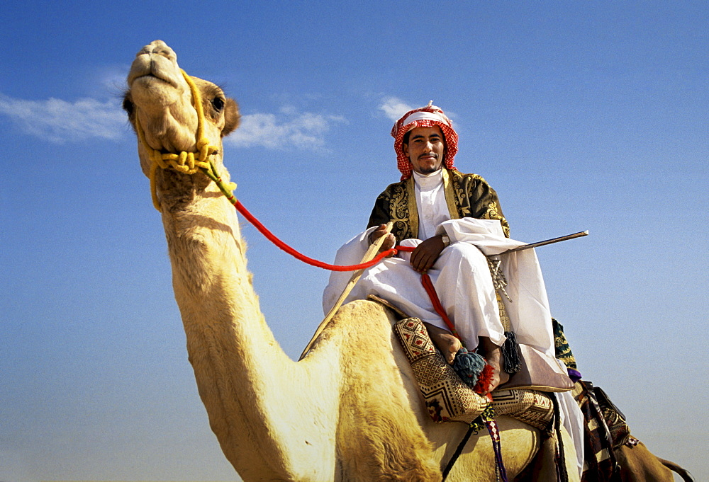 Camel and arab rider in Riyadh, Saudi Arabia