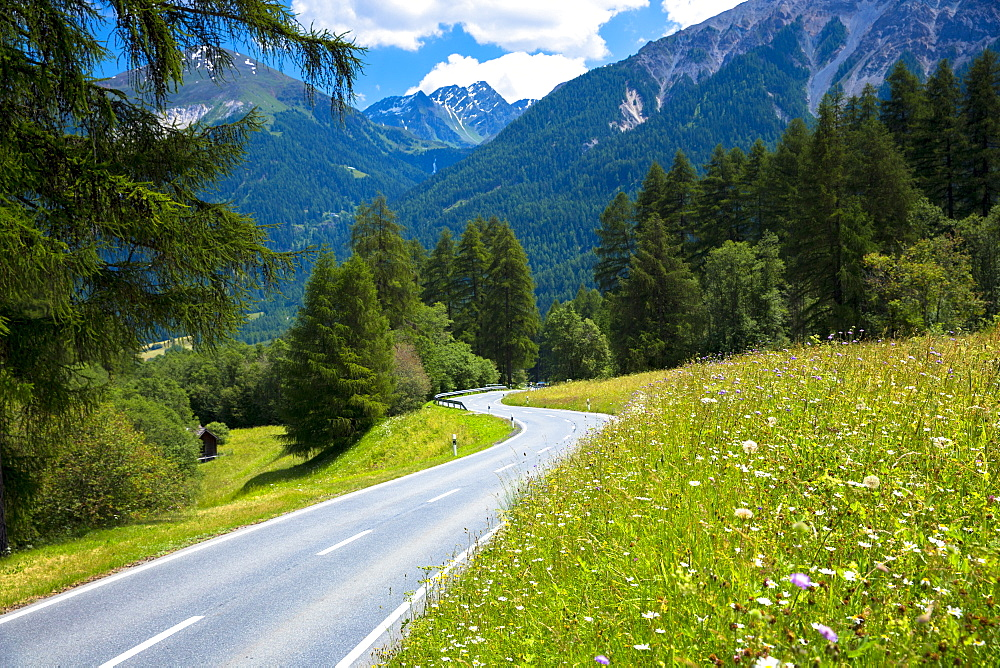 Route past Alpine flower meadows in the Swiss National Park, the Swiss Alps, Switzerland, Europe