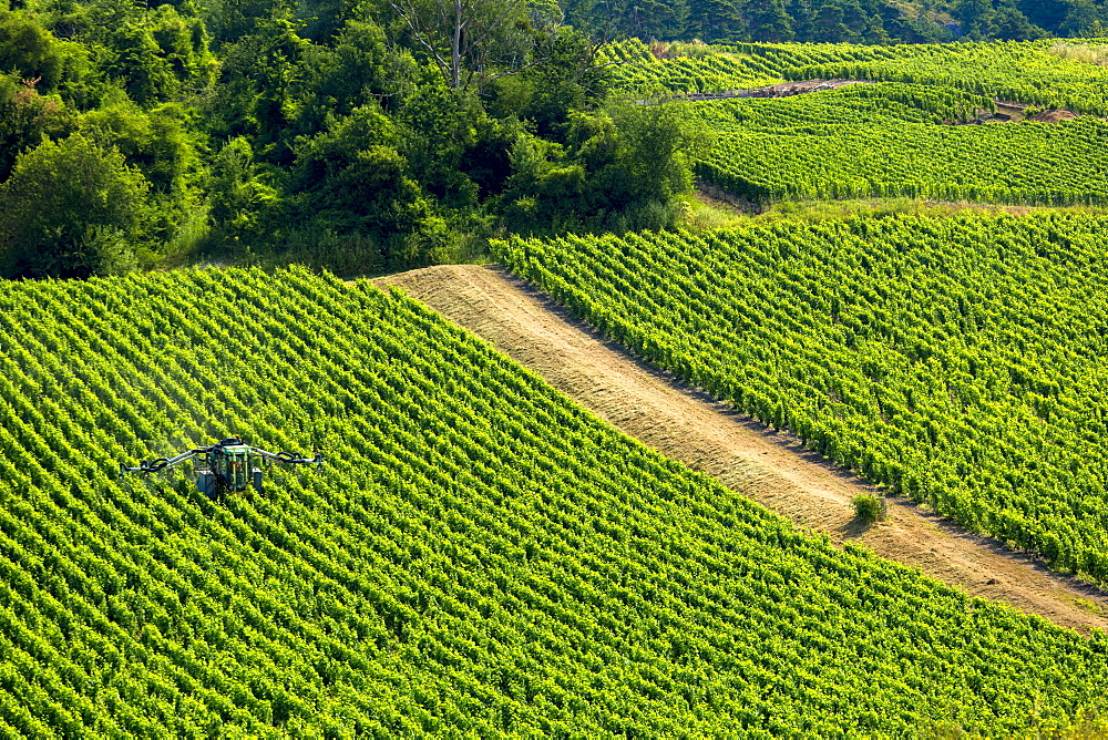 Vine tractor crop-spraying grapevines along the Champagne Tourist Route in the Marne Valley, Champagne-Ardenne, France, Europe