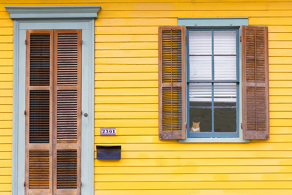 Cat at window of clapboard creole cottage home in Faubourg Marigny historic district  of New Orleans, USA