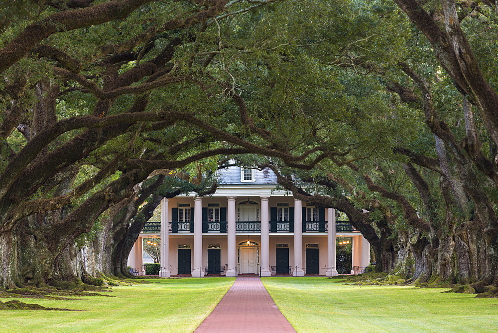 Oak Alley plantation antebellum mansion house and canopy of live oak trees along Mississippi River at Vacherie, Louisiana, USA - 1161-8729