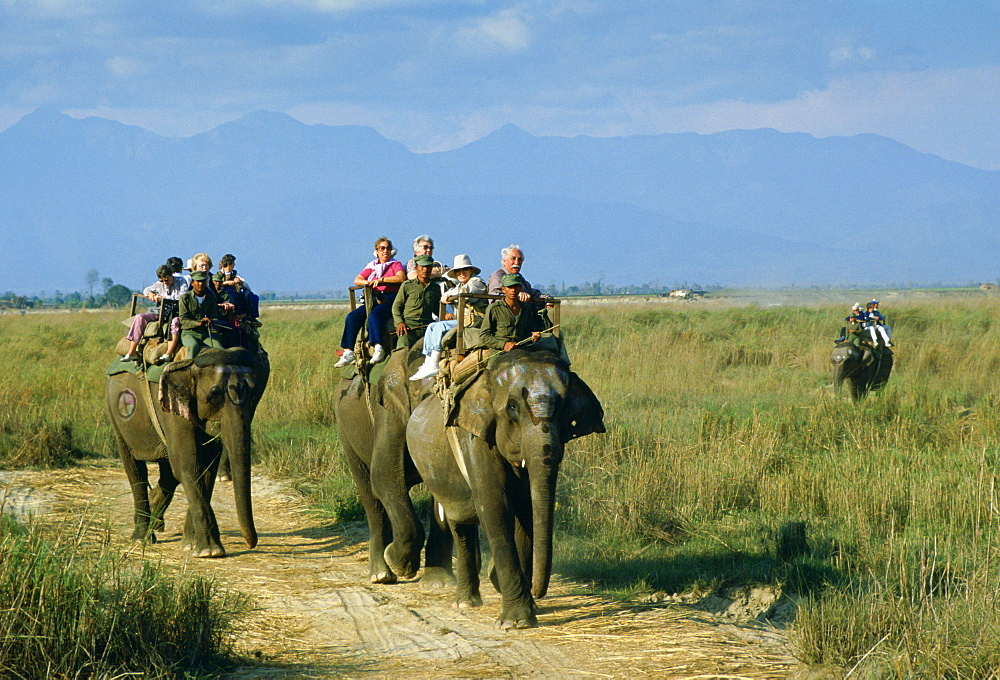 Tourists on elephants in Royal Chitwan National Park, Nepal - 1161-887
