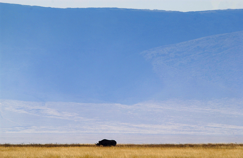 Rhinoceros with crater rim behind, Ngorngoro Crater, Tanzania, East Africa