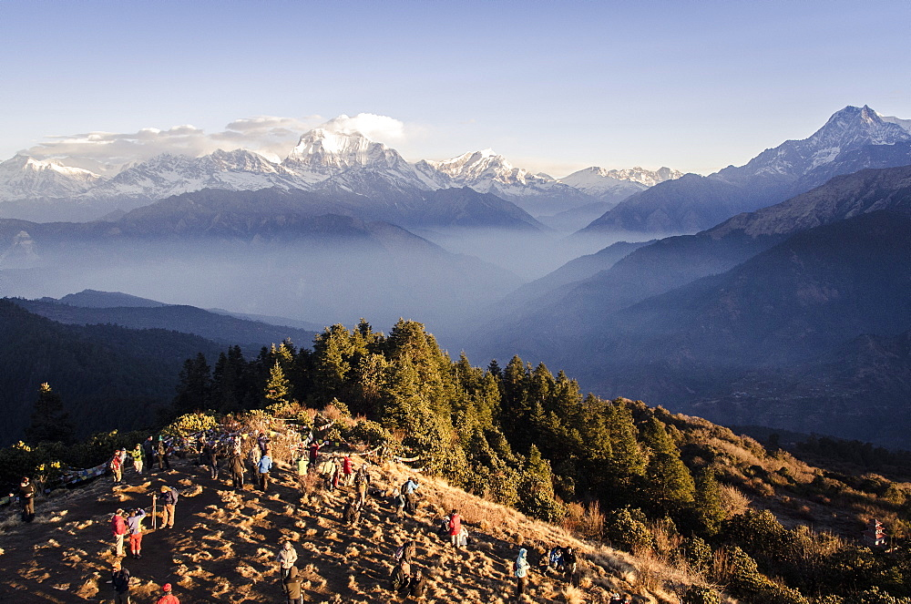 Tourists gather on Poon Hill to watch the sunrise over the Annapurna Himal, with Dhaulagiri, 8167m, Dhampus Peak, 6012m, and Tukuche Peak, 6920m and Nilgiri, 7061m, visible in the background, Annapurna Conservation Area, Nepal, Himalayas, Asia  - 1163-71