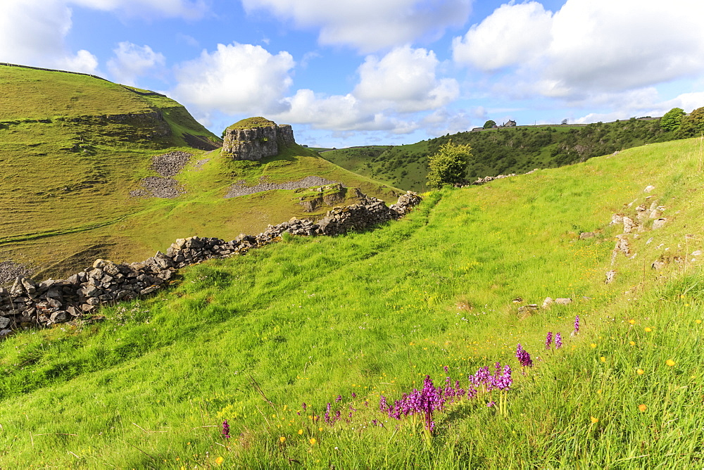 Early purple orchids (Orchis mascula) and Peter's Rock, Cressbrook Dale Nature Reserve in May, Peak District, Derbyshire, England, United Kingdom, Europe