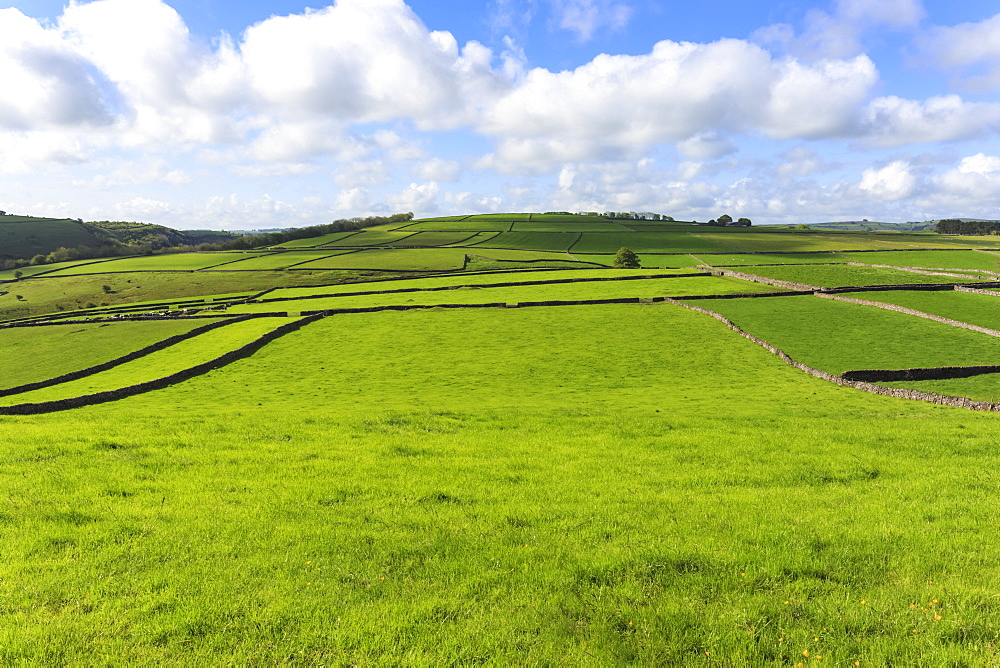 Sweeping landscape featuring dry stone walls in spring, Peak District National Park, near Litton, Derbyshire, England, United Kindom, Europe
