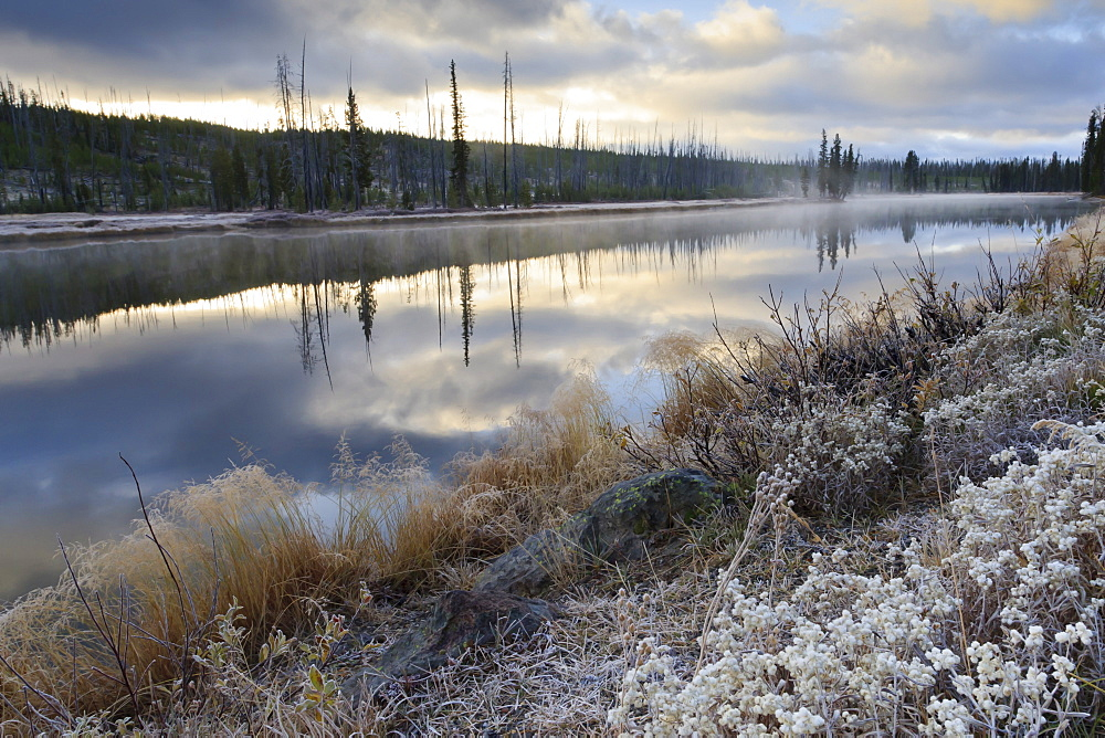 Regenerating trees reflected in a frosty and misty Lewis River, Yellowstone National Park, UNESCO World Heritage Site, Wyoming, United States of America, North America