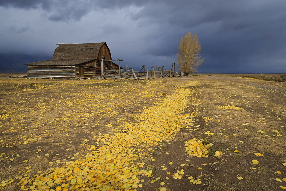 Storm approaches, autumn (fall) leaves cover the ground, Mormon Row barn, Grand Teton National Park, Wyoming, United States of America, North America