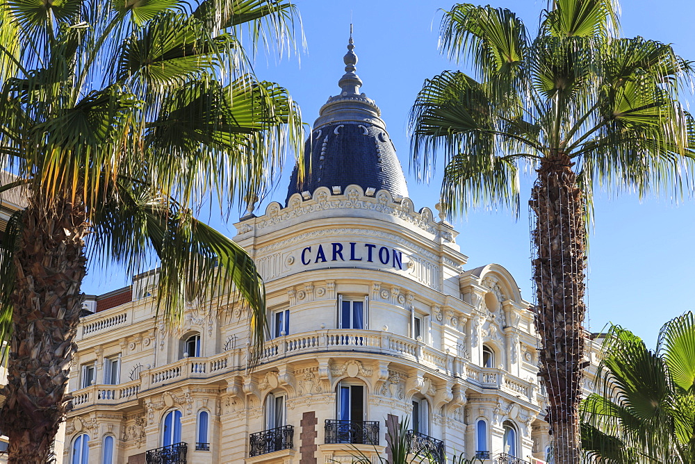 Carlton Hotel and palm trees, La Croisette, Cannes, French Riviera, Cote d'Azur, Alpes Maritimes, Provence, France, Europe