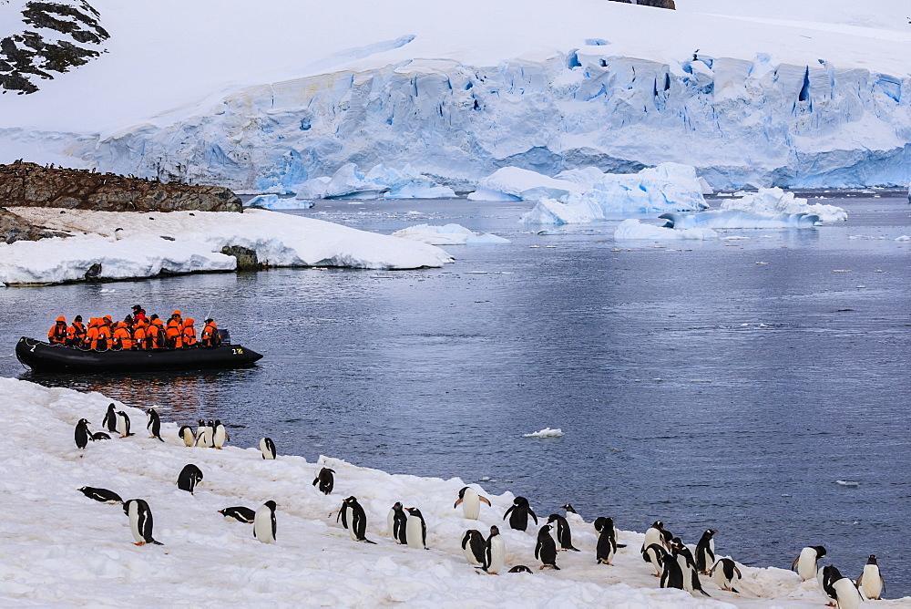 Gentoo penguins (Pygoscelis papua), tourists on a zodiac and blue glacier, Cuverville Island, Antarctic Peninsula, Antarctica