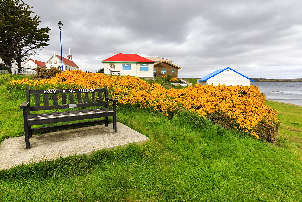Attractive Victory Green, wooden bench and flowering gorse, church in the distance, Stanley, Port Stanley, East Falkland, Falkland Islands, South America - 1167-1833