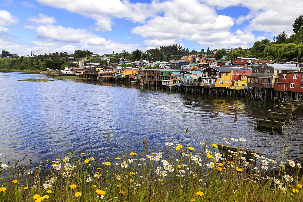 Palafitos, colourful stilt houses on water's edge, unique to Chiloe, with wild flowers, Castro, Isla Grande de Chiloe, Chile, South America