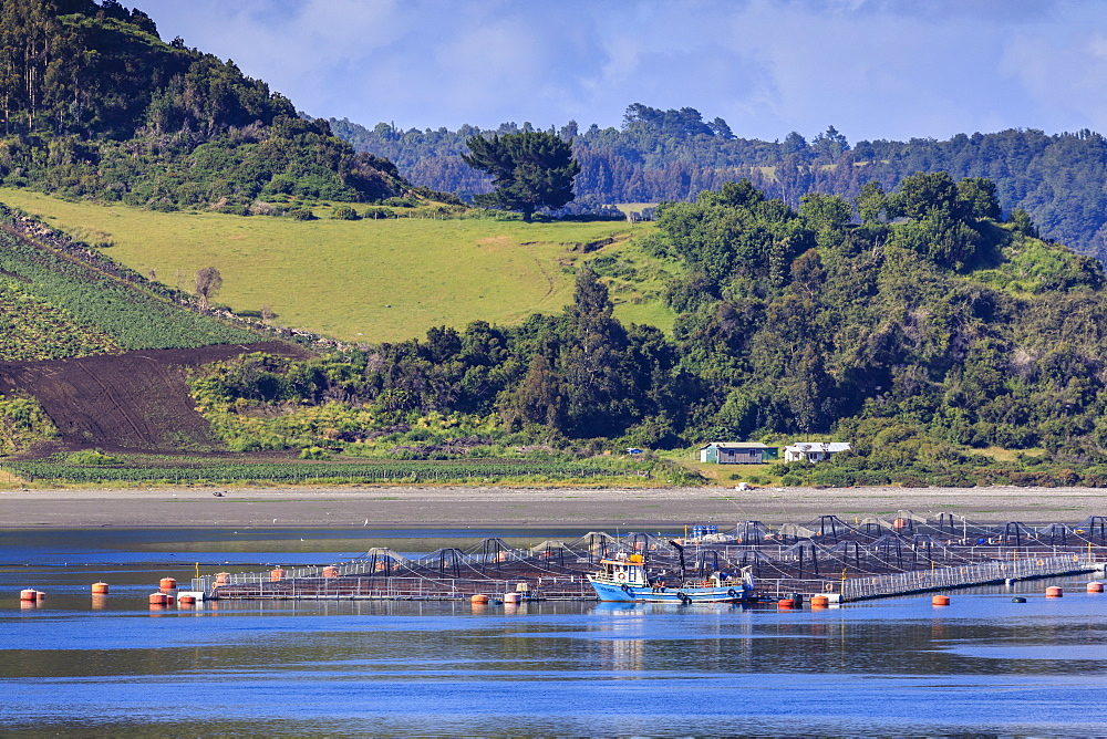Salmon and mussel aquaculture, rolling hills and trees, Castro inlet, Isla Grande de Chiloe, Chilean Lake District, Chile, South America - 1167-1873