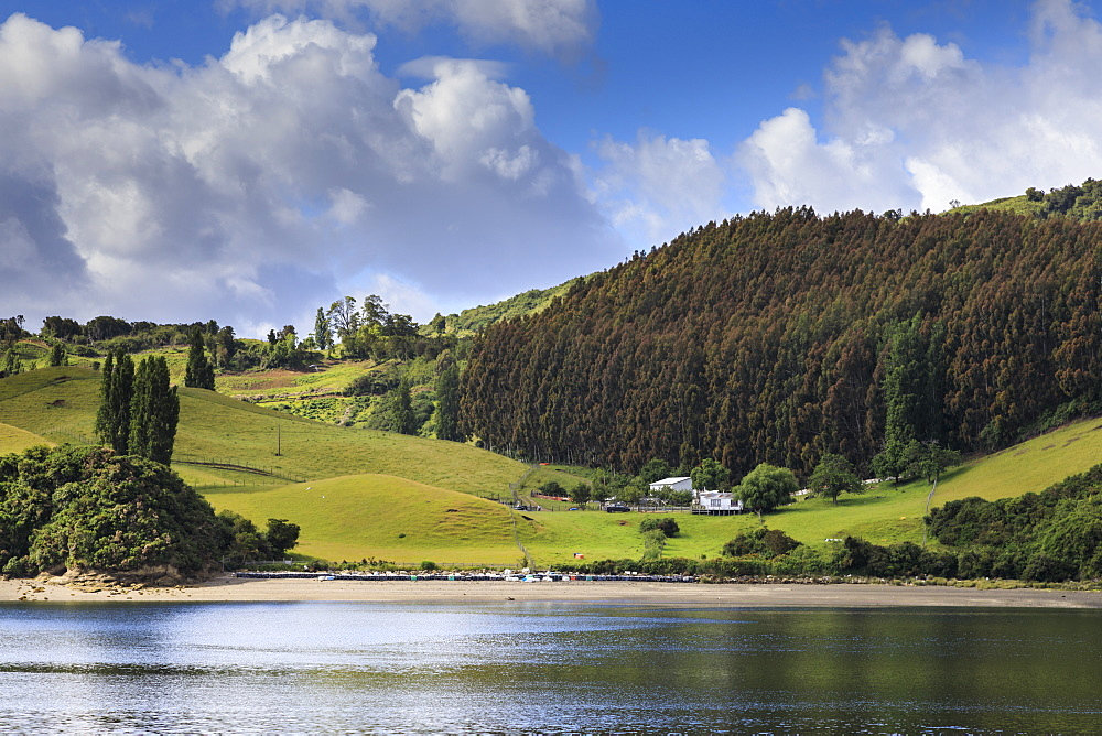 Lush rolling green hills and dense forest, scenic rural landscape, Castro inlet, Isla Grande de Chiloe, Lake District, Chile, South America