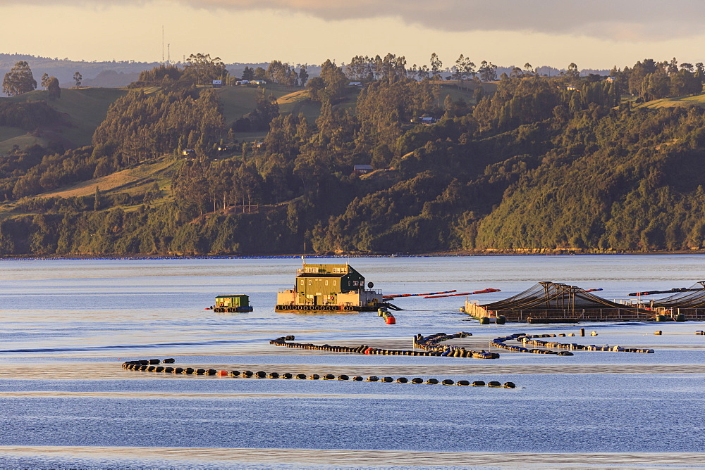Floating house, salmon and mussel aquaculture, rural scene, late evening sun, Castro inlet, Isla Grande de Chiloe, Chile, South America