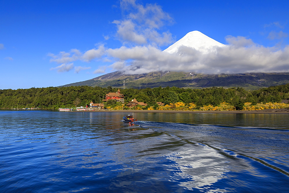 Petrohue, snow-capped, conical Osorno volcano, Lake Todos Los Santos, Vicente Perez Rosales National Park, Lakes District, Chile, South America - 1167-1878