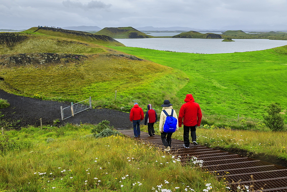 Tourists hiking in rain to the Skutustadagigar pseudo craters, wild flowers, Lake Myvatn, Akureyri, Iceland