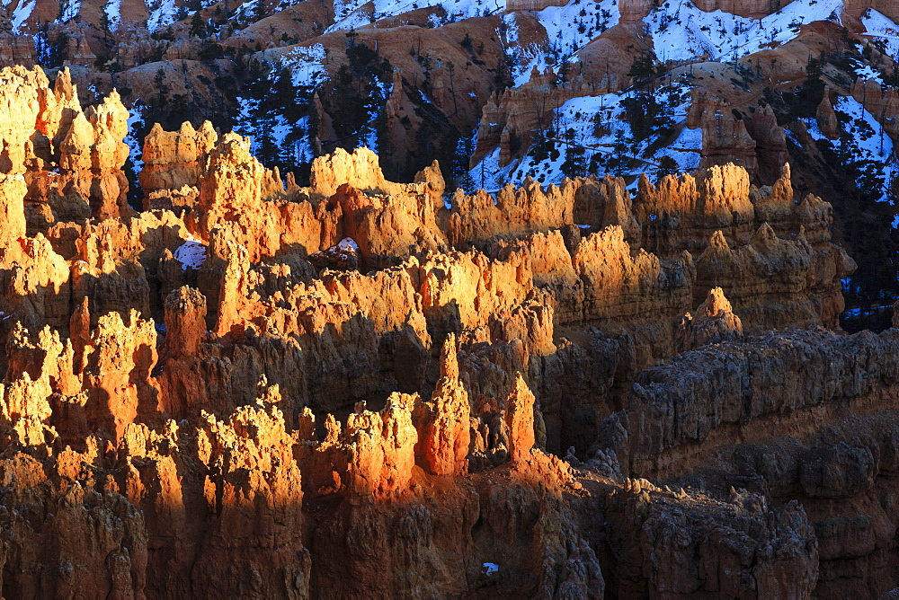 Hoodoos lit by late afternoon sun with snowy backdrop, from Rim Trail near Sunset Point, Bryce Canyon National Park, Utah, United States of America, North America