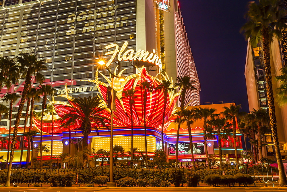 Neon lights, Las Vegas Strip at dusk with Flamingo Facade and palm trees, Las Vegas, Nevada, United States of America, North America