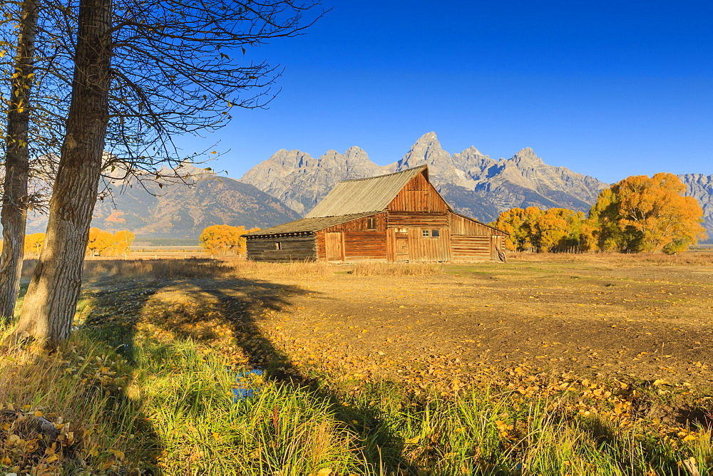 Mormon Row barn on a clear Autumn (Fall) morning, Antelope Flats, Grand Teton National Park, Wyoming, United States of America, North America
