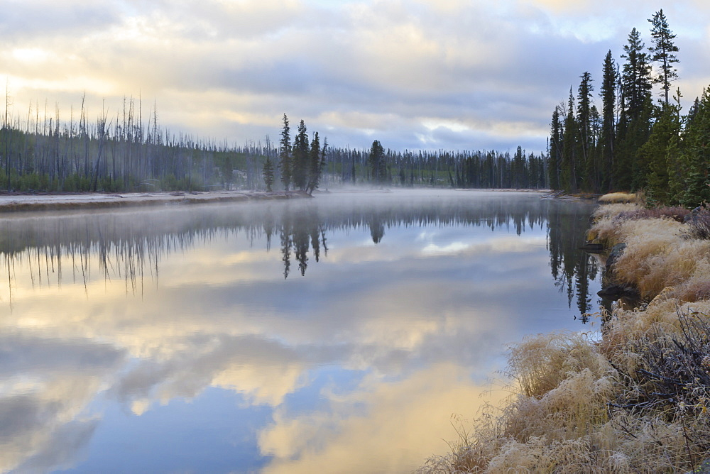 Regenerating trees reflected in a frosty and misty Lewis River at dawn, Yellowstone National Park, UNESCO World Heritage Site, Wyoming, United States of America, North America