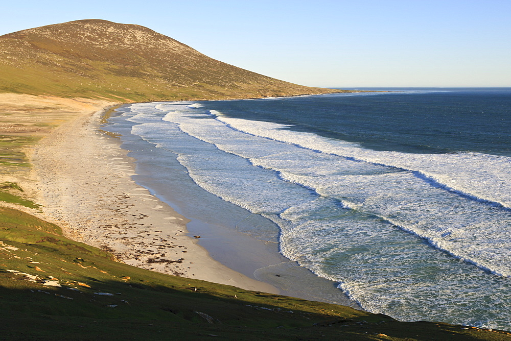 Elevated view of Mount Harston, white sand beach and rolling waves, the Neck, Saunders Island, Falkland Islands, South America