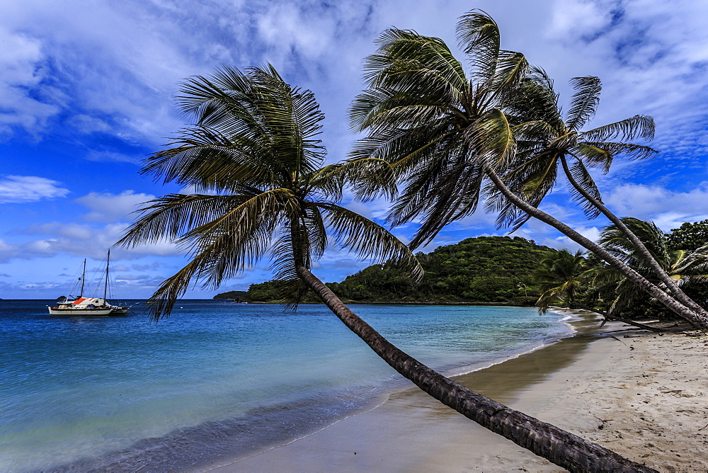 Palm trees and deserted beach, Saltwhistle Bay, Mayreau, Grenadines of St. Vincent, Windward Islands, West Indies, Caribbean, Central America