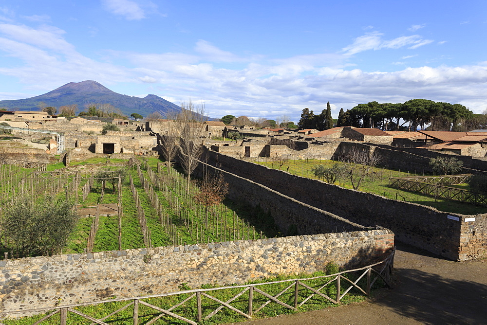 Elevated view to Mount Vesuvius, over Garden of the Fugitives, Roman ruins of Pompeii, UNESCO World Heritage Site, Campania, Italy, Europe