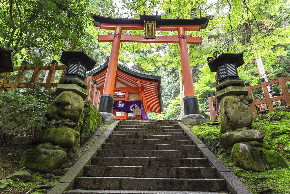 Moss covered Shinto shrine surrounded by thick forest in summer, Fushimi Inari Taisha, Mount Inari, Kyoto, Japan, Asia