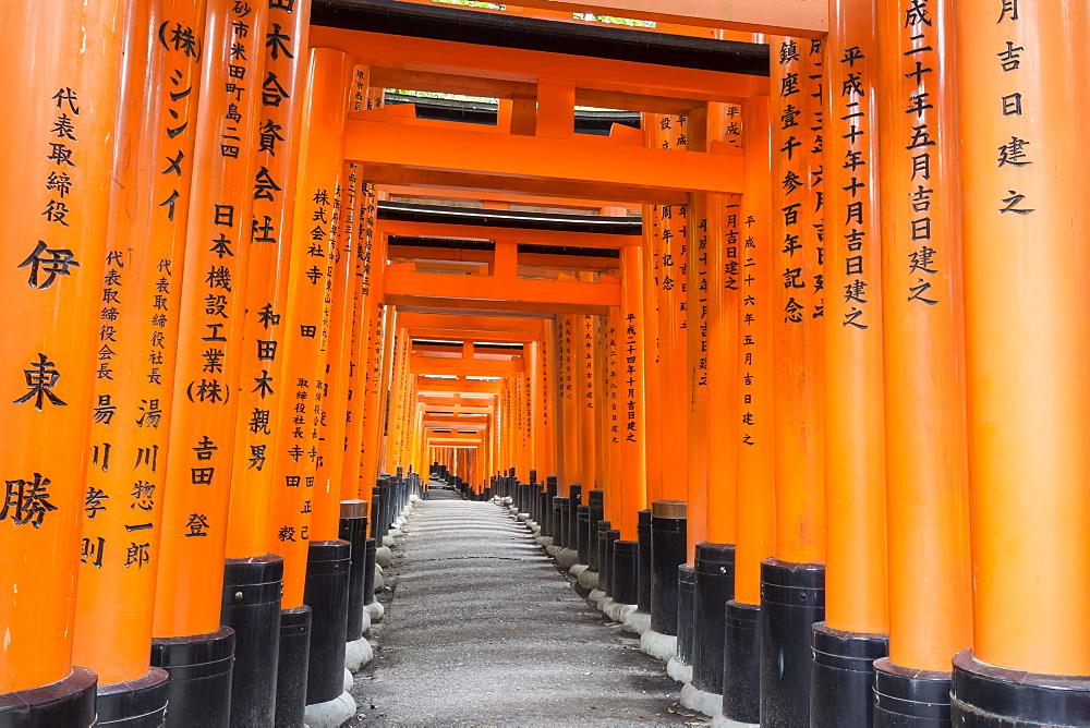 Fushimi Inari Taisha, Shinto shrine, vermilion torii gates line paths in wooded forest on Mount Inari, Kyoto, Japan, Asia