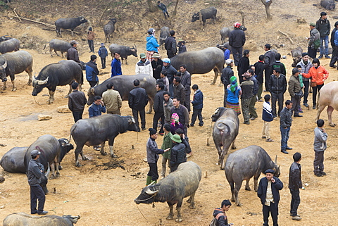 People at water buffalo market, Can Cau market, Bac Ha area, Sapa region, Lao Cai Province, Vietnam, Indochina, Southeast Asia, Asia - 1170-164