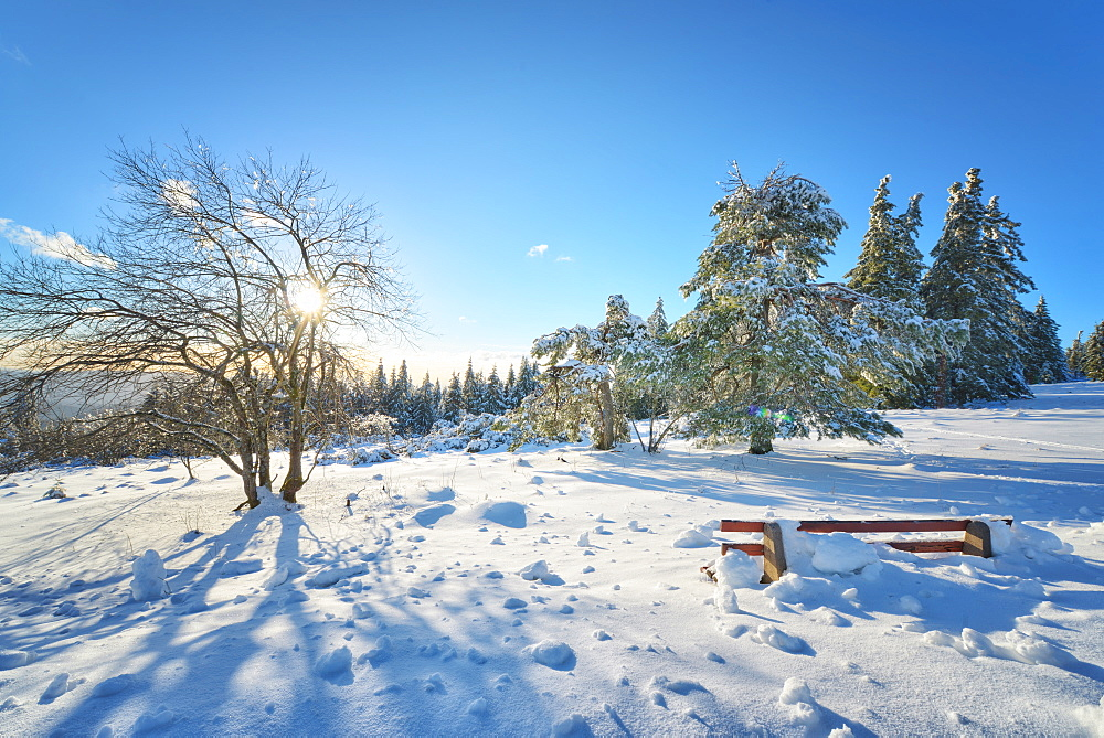 Bench and trees covered in deep snow on mountain Schliffkopf in Northern Black Forest, Baden-Wurttemberg, Germany, Europe