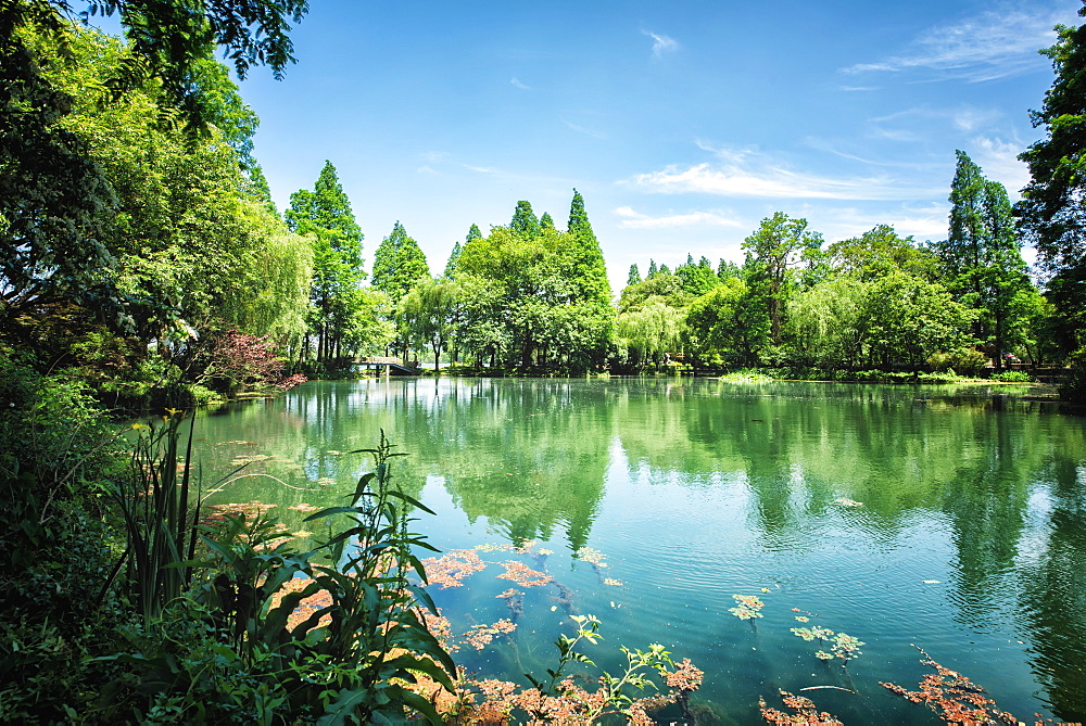 Peaceful lake scene with greenery at one of the lesser known spots at West Lake in Hangzhou, Zhejiang, China, Asia