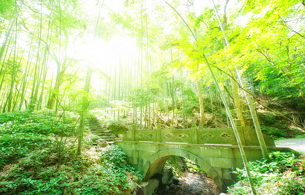Old stone bridge and lush foliage in the Yun Qi Bamboo Forest, Zhejiang, China, Asia - 1171-179