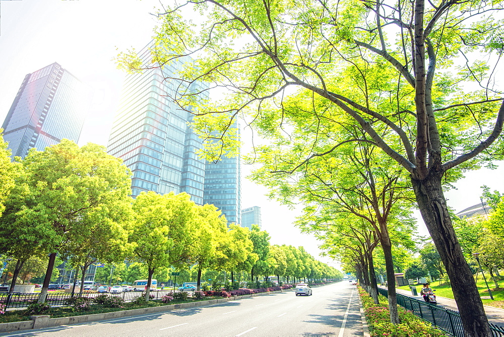 Trees lining the streets in Jianggan New Town, the new business district of Hangzhou City, Zhejiang, China, Asia - 1171-207