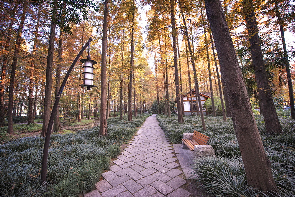 Forest path with bench and lanterns in a West Lake park, Hangzhou, Zhejiang, China, Asia