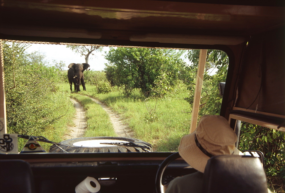 Elephant Looking at Driver in Car