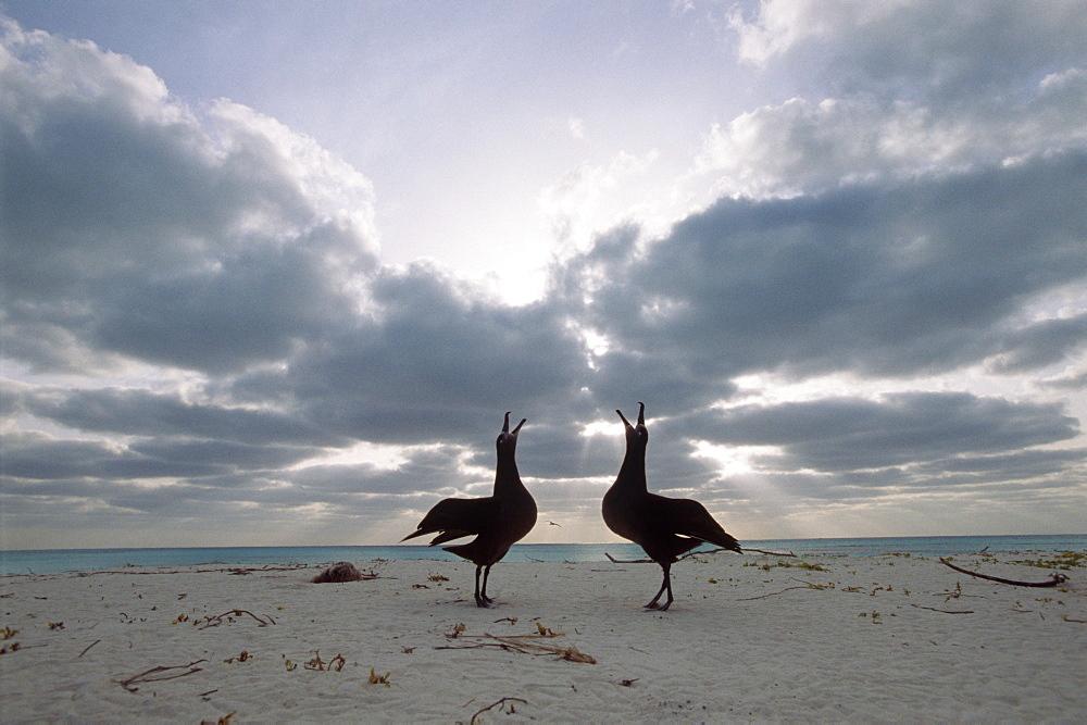 Croissy Albatross