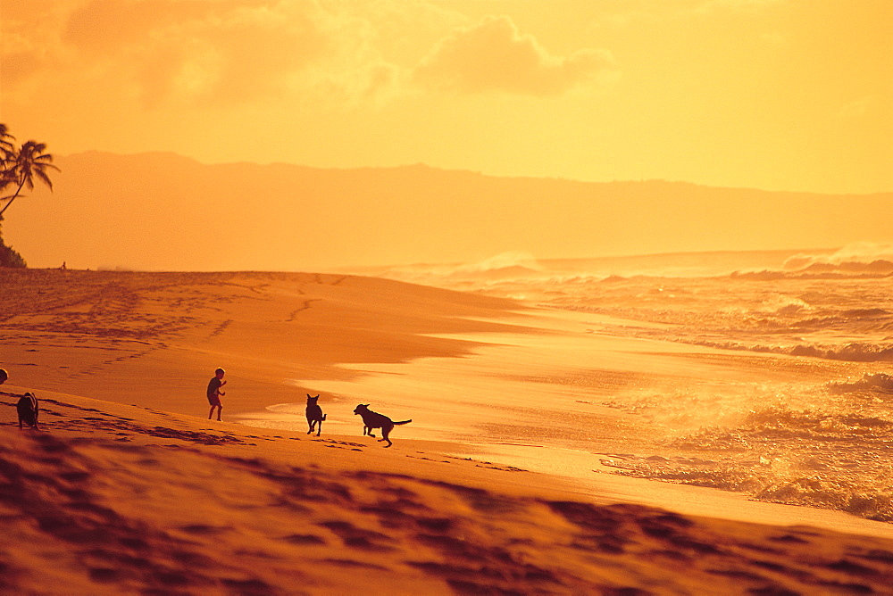 Dogs And Their Owners Playing on Beach