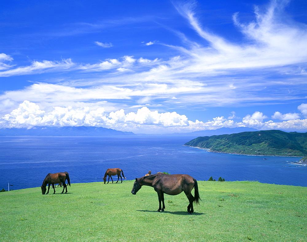 Horses, Japan