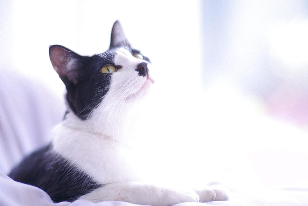 Cat - 1172-2219