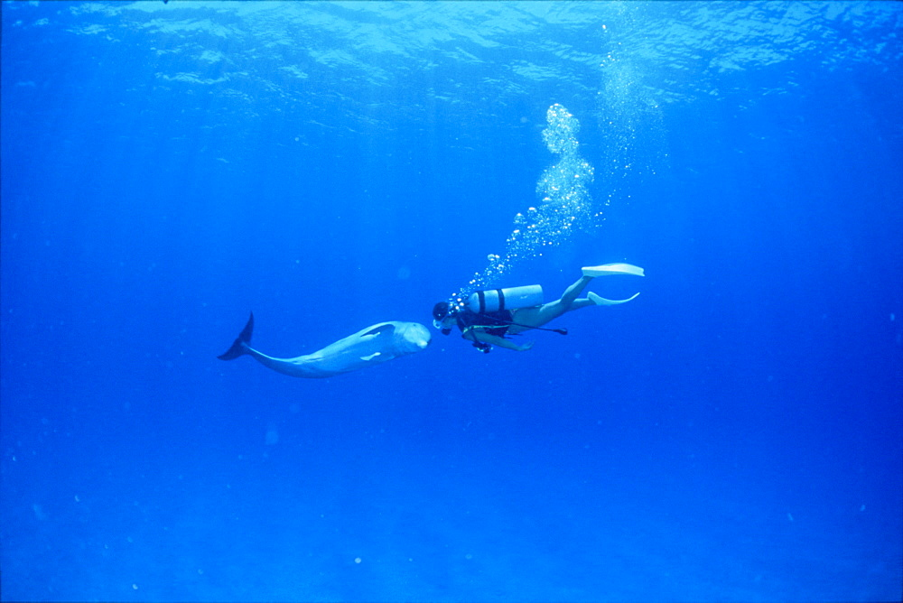 Diver and dolphin