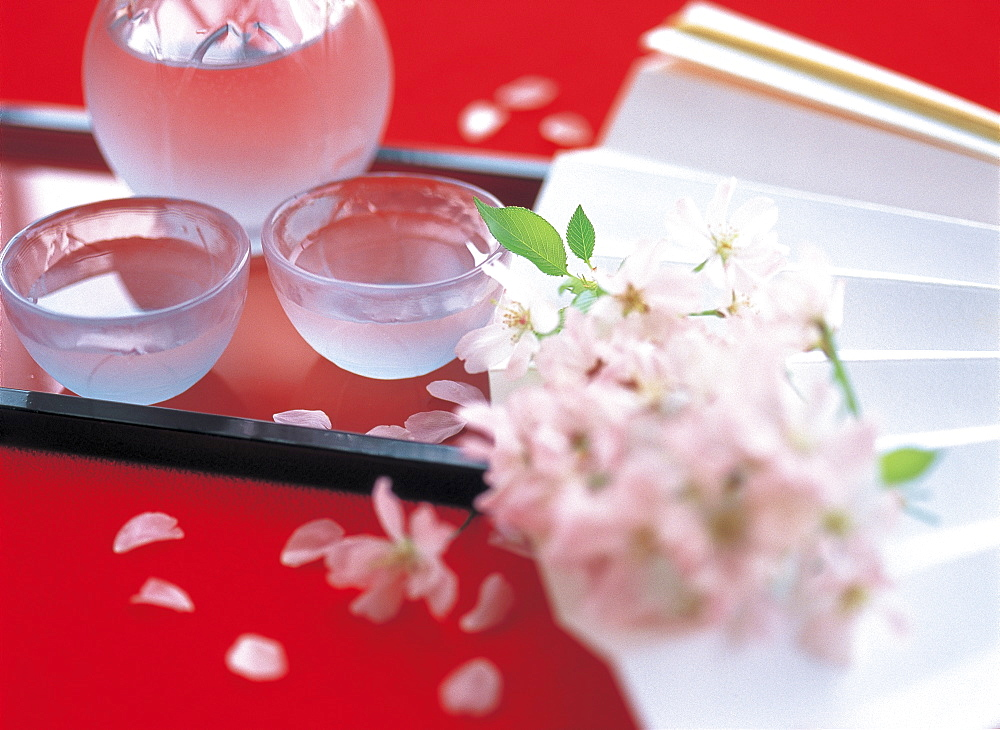 Fan And Cold Sake And Cherry Blossom