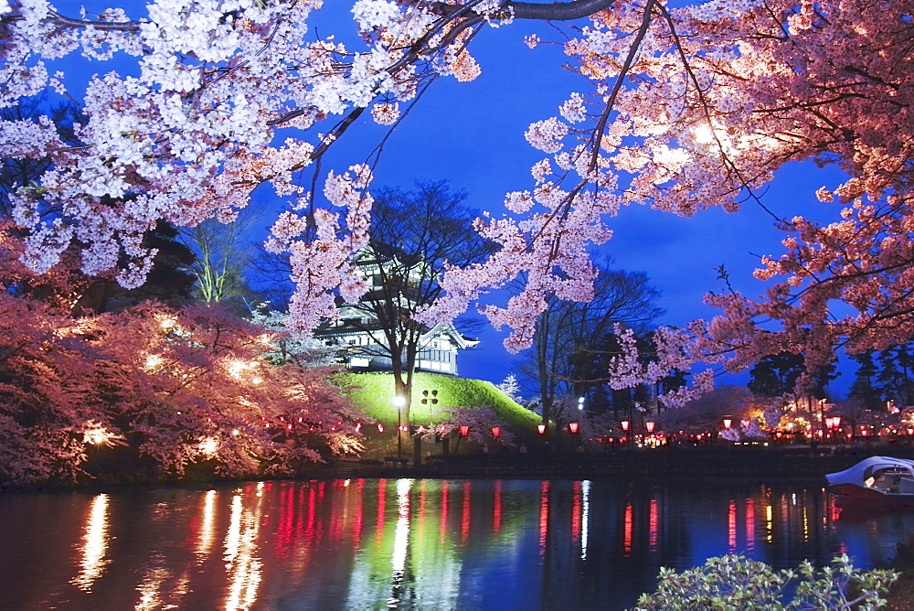 Nocturnal View Of Cherry Blossoms, Takada Castle, Joetsu, Niigata Prefecture, Japan