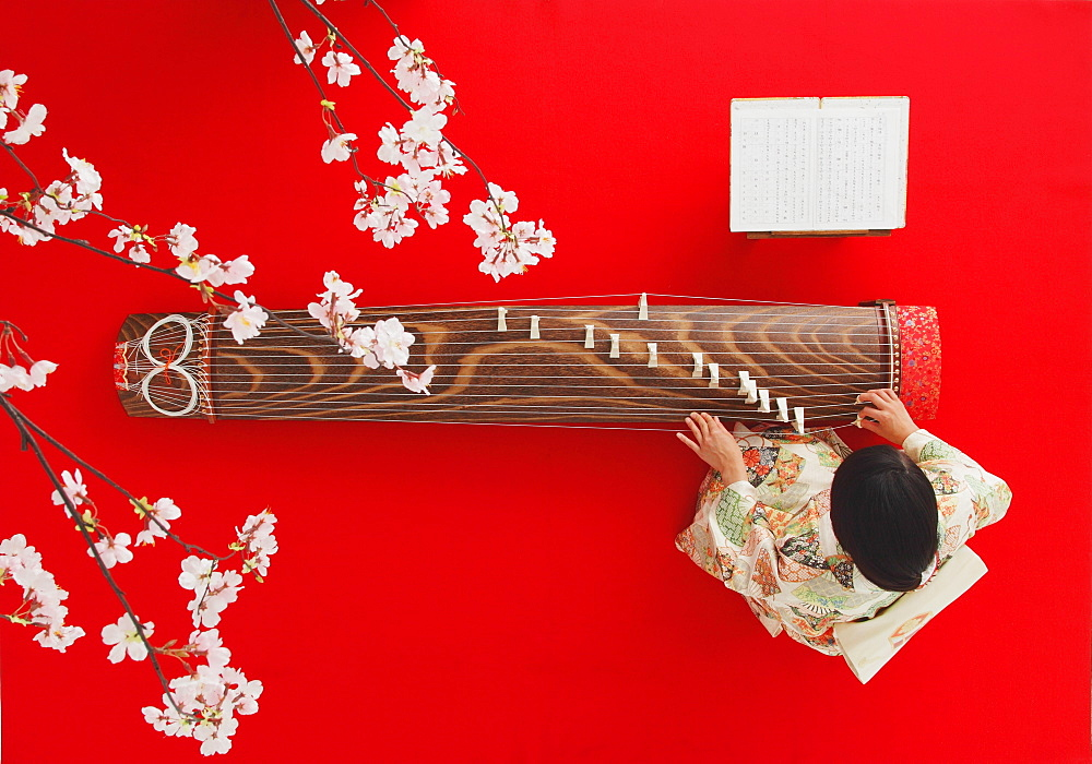 Japanese woman in a kimono playing the koto and cherry blossoms