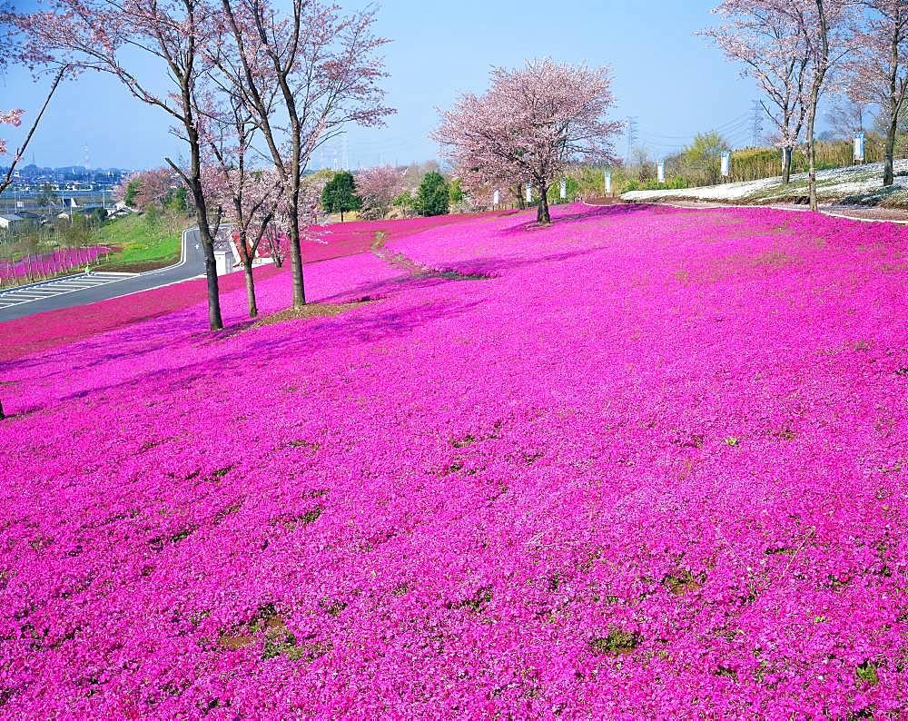 Otahokubuundo Park, Gunma, Japan